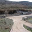 Reserva del bisonte europeo1