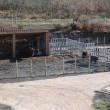 Reserva del bisonte europeo2