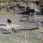 Reserva del bisonte europeo5