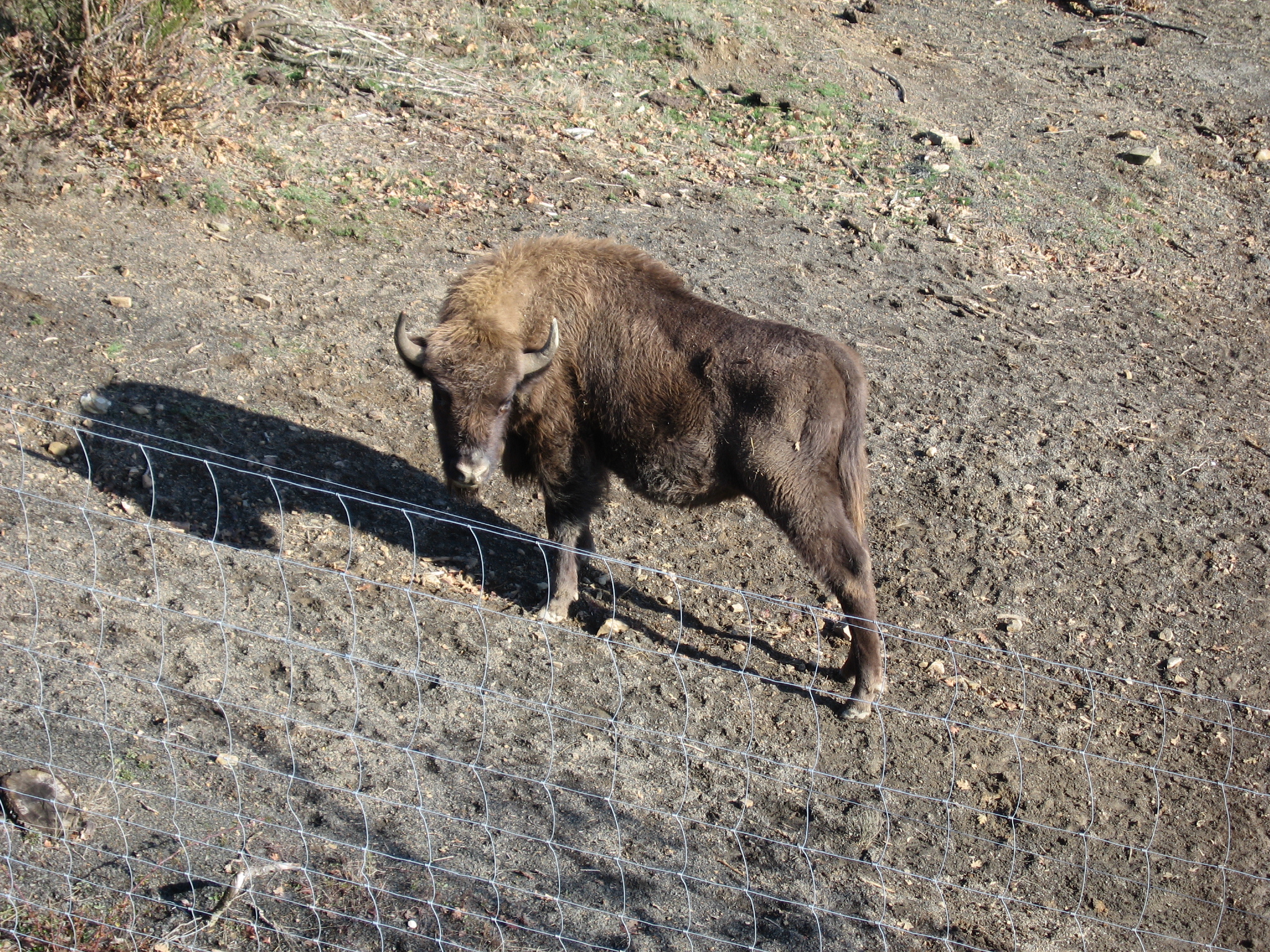 Reserva del bisonte europeo7